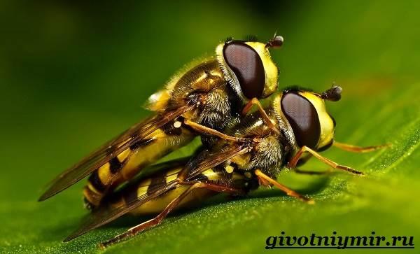 Оса-насекомое-Образ-жизни-и-среда-обитания-осы-9