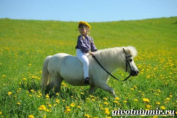 Пони-лошадь-Образ-жизни-и-среда-обитания-пони-5