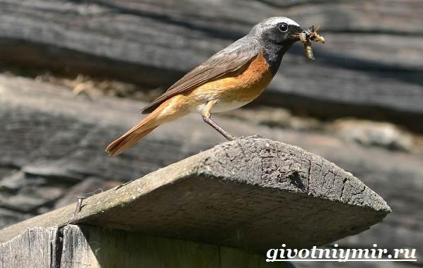 Птица-мухоловка-Образ-жизни-и-среда-обитания-птицы-мухоловки-1