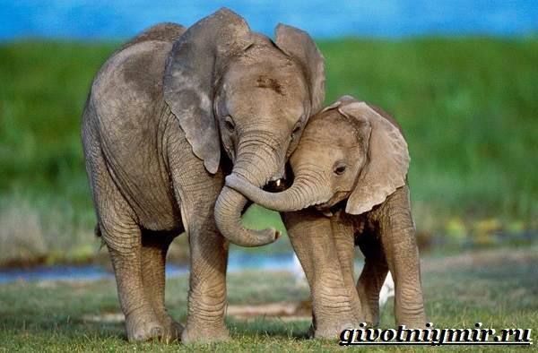 Картинки по запросу фото  Слон