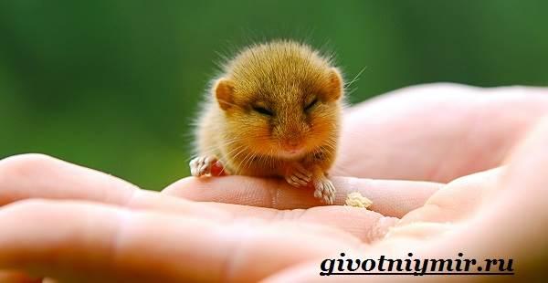 Соня-животное-Образ-жизни-и-среда-обитания-сони-10