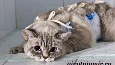 Стерилизация кошек. Особенности, отзывы, уход и цена стерилизации кошек