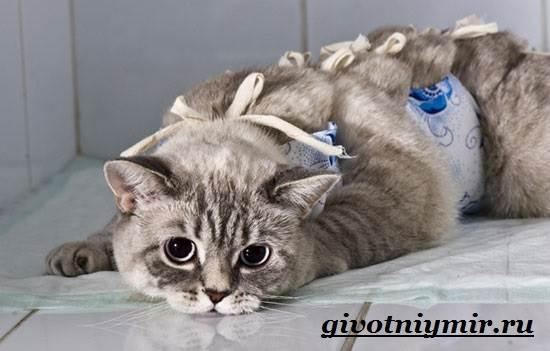 Стерилизация-кошек-Особенности-отзывы-уход-и-цена-стерилизации-кошек-1