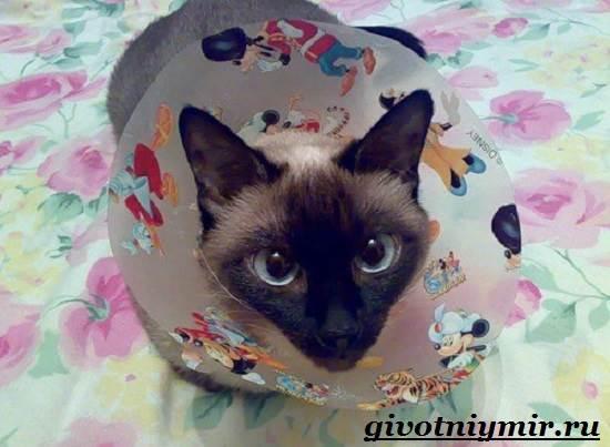 Стерилизация-кошек-Особенности-отзывы-уход-и-цена-стерилизации-кошек-10