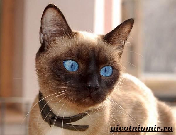 Стерилизация-кошек-Особенности-отзывы-уход-и-цена-стерилизации-кошек-11