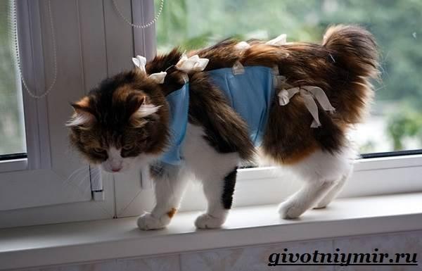 Стерилизация-кошек-Особенности-отзывы-уход-и-цена-стерилизации-кошек-2