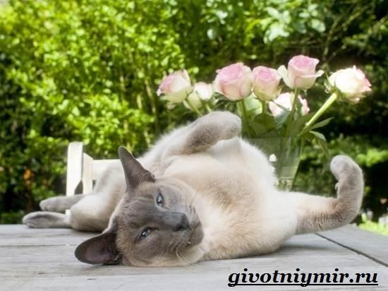 Стерилизация-кошек-Особенности-отзывы-уход-и-цена-стерилизации-кошек-4