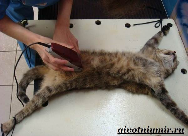 Стерилизация-кошек-Особенности-отзывы-уход-и-цена-стерилизации-кошек-6