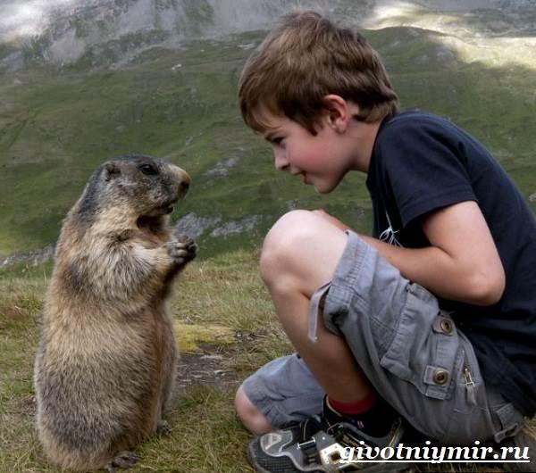 Сурок-животное-Образ-жизни-и-среда-обитания-сурка-5