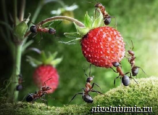 Все про муравьев для детей