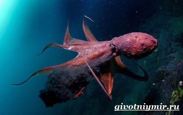 Осьминог-животное-Образ-жизни-и-среда-обитания-осьминога-10