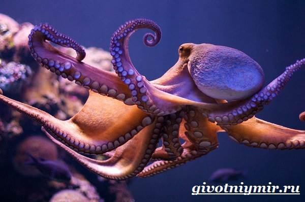 Осьминог-животное-Образ-жизни-и-среда-обитания-осьминога-4