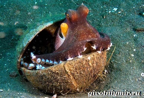 Осьминог-животное-Образ-жизни-и-среда-обитания-осьминога-9