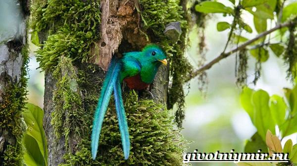 Райская-птица-Образ-жизни-и-среда-обитания-райской-птицы-8