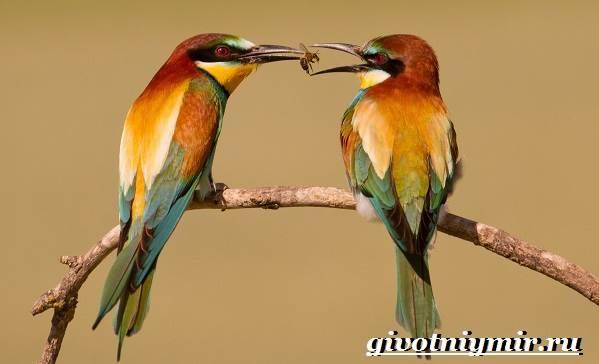 Щурка-птица-Образ-жизни-и-среда-обитания-щурки-2