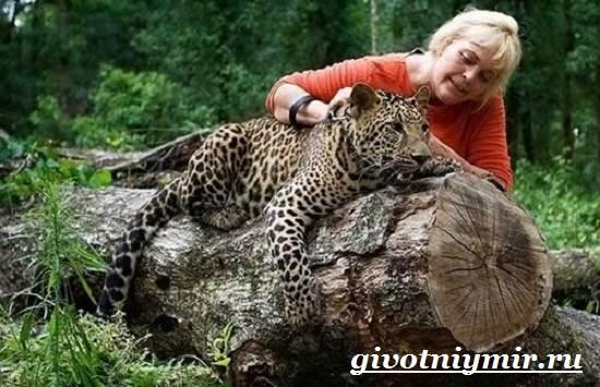 Ягуар-животное-Образ-жизни-и-среда-обитания-ягуара-6