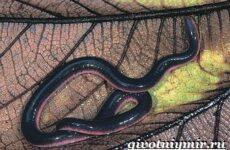 Червяга животное. Образ жизни и среда обитания червяги