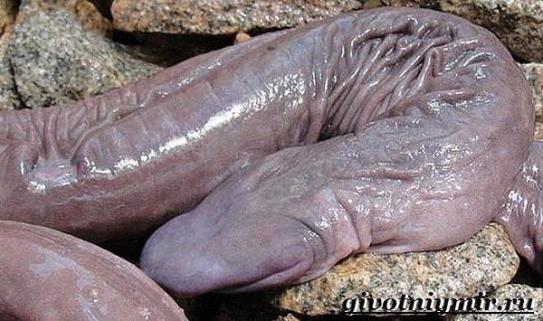Червяга-животное-Образ-жизни-и-среда-обитания-червяги-6