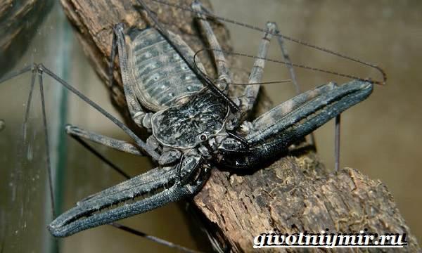Фрин-паук-Образ-жизни-и-среда-обитания-паука-фрина-1