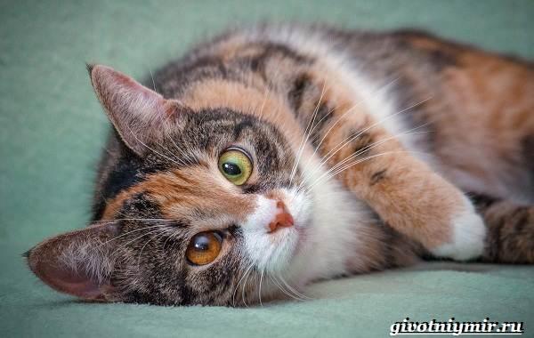 Трехцветная кошка  почему она особенная