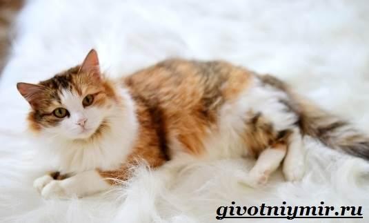 кошки фото трёхцветные