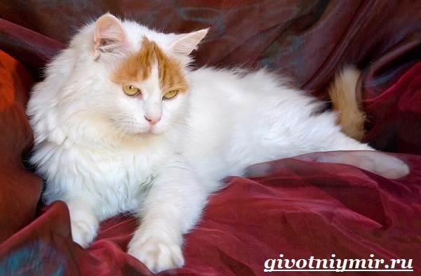 Турецкий-ван-кошка-Особенности-уход-и-цена-турецкого-вана-2