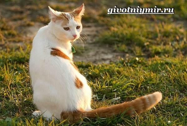 Турецкий-ван-кошка-Особенности-уход-и-цена-турецкого-вана-5