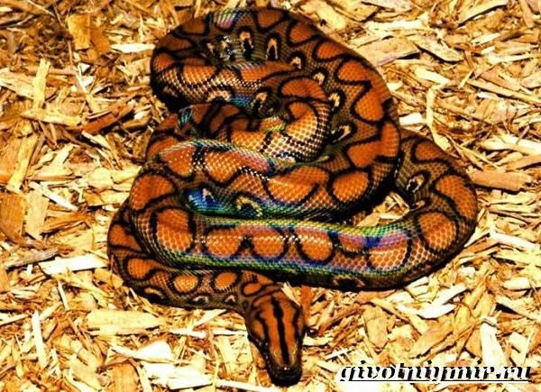 Аспид-змея-Образ-жизни-и-среда-обитания-змеи-аспид-2