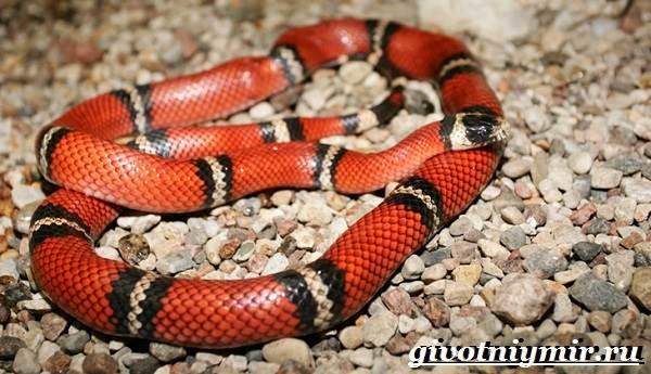 Аспид-змея-Образ-жизни-и-среда-обитания-змеи-аспид-3