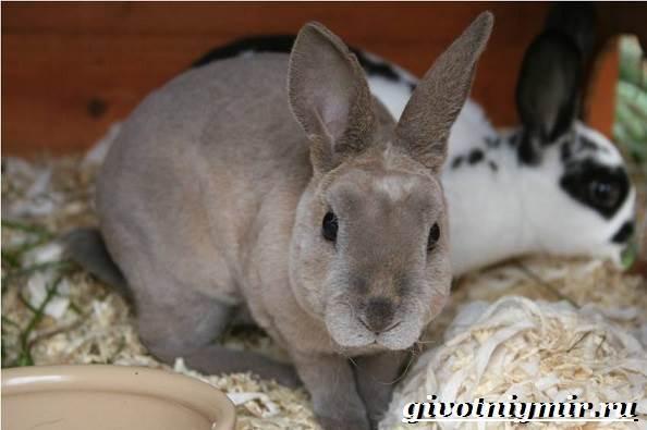 Кролик-рекс-Образ-жизни-и-среда-обитания-кроликов-рекс-4