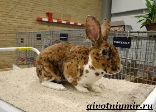 Кролик-рекс-Образ-жизни-и-среда-обитания-кроликов-рекс-5