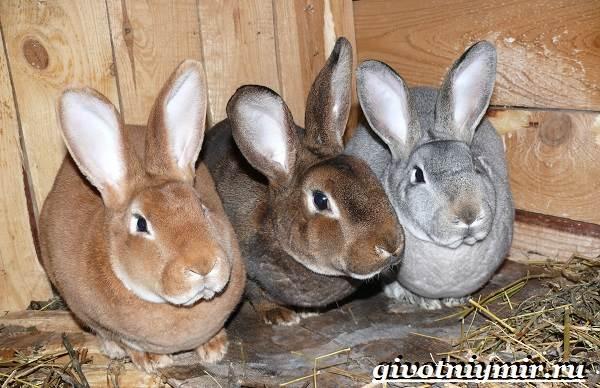 Кролик-рекс-Образ-жизни-и-среда-обитания-кроликов-рекс-6
