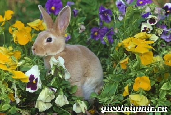 Кролик-рекс-Образ-жизни-и-среда-обитания-кроликов-рекс-9