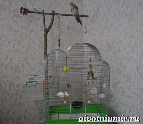 Попугай-корелла-Описание-особенности-цена-и-уход-за-попугаем-корелла-4