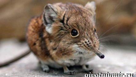 Прыгунчик животное. Образ жизни и среда обитания прыгунчика