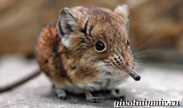 Прыгунчик-животное-Образ-жизни-и-среда-обитания-прыгунчика-1