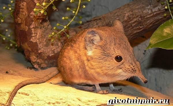 Прыгунчик-животное-Образ-жизни-и-среда-обитания-прыгунчика-4