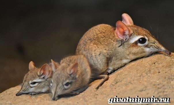 Прыгунчик-животное-Образ-жизни-и-среда-обитания-прыгунчика-8