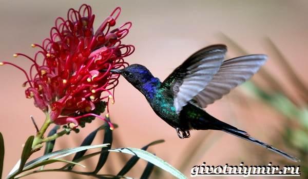 Нектарница-птица-Образ-жизни-и-среда-обитания-нектарницы-7