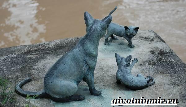 Сингапурская-кошка-Описание-особенности-уход-и-цена-сингапурской-кошки-7