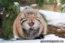 Степной кот. Образ жизни и среда обитания степного кота