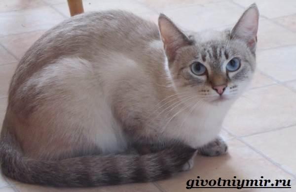 тайская кошка окрасы с фотографиями