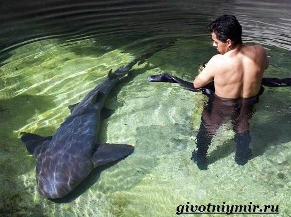 Кошачья-акула-Образ-жизни-и-среда-обитания-кошачьей-акулы-4