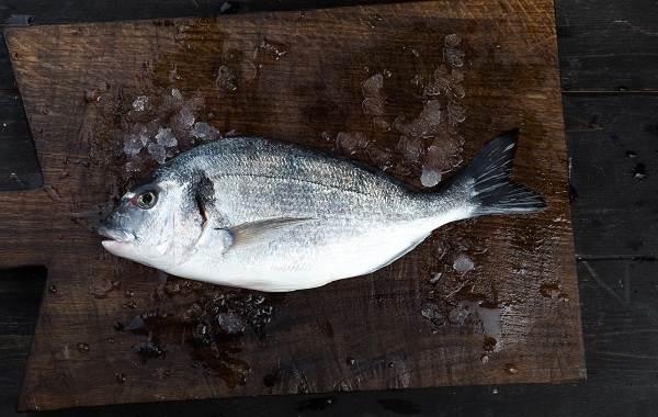 Дорадо-рыба-Образ-жизни-и-среда-обитания-рыбы-дорадо-10