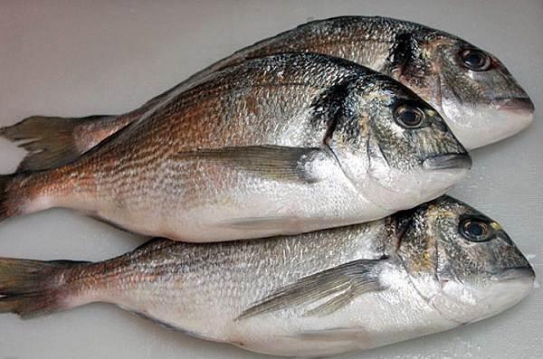 Дорадо-рыба-Образ-жизни-и-среда-обитания-рыбы-дорадо-15