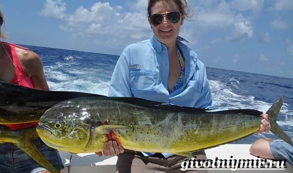Дорадо-рыба-Образ-жизни-и-среда-обитания-рыбы-дорадо-8