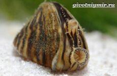 Дрейссена моллюск. Образ жизни и среда обитания дрейссены