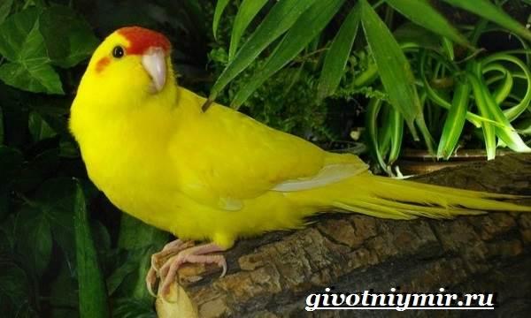 Какарики попугаи отзывы и фото