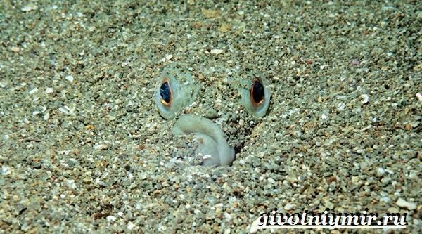 Камбала-рыба-Образ-жизни-и-среда-обитания-рыбы-камбалы-4