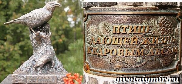 Кедровка-птица-Образ-жизни-и-среда-обитания-птицы-кедровки-10